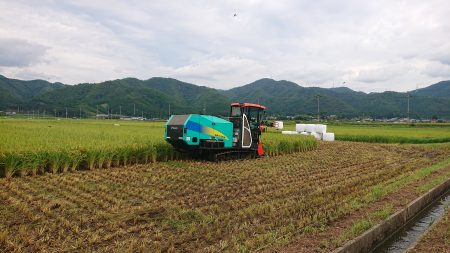稲WCSの収穫始まる